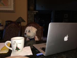 Rascal writing my novel.